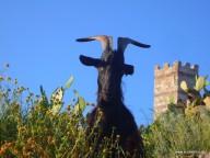Die Burg Malaspina krönt Bosa und hat liebreizende Bewohner
