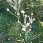 die pflanzen sardiniens
