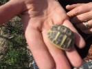 sardinien-ferienwohnung tartaruga-4