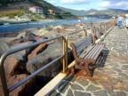 Sardinien Bosa Marina Temo 186