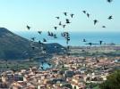 SardinienBosa- Temotal-tauben