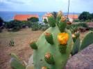 sardinien-porto-alabe-opuntia