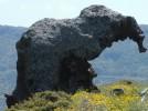 Sardinien, Castelsardo und Umgebung, der Elefantenfelsen, Roccia dell'Elefante