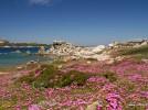 Sardinien, Castelsardo, Spiaggia dei graniti