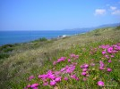 Frühling an der Küste von Turas