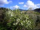 Sardinien im März, April