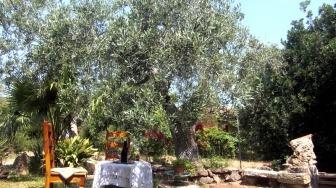 Landhaus Cabras oleificio