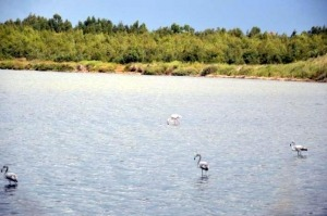 Flamingos- fenicotteri