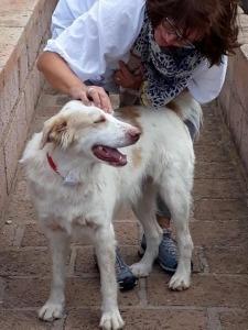Abschied vom Hund