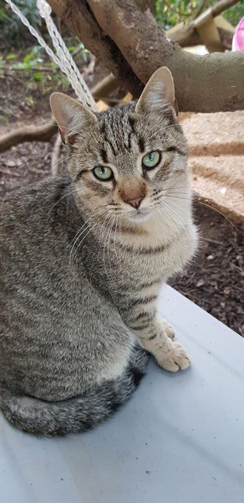 Katzen in Sardinien, Gino