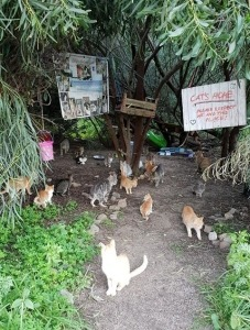 Katzen in Sardinien