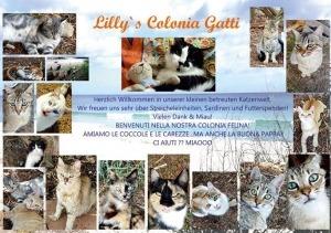 Katzen auf Sardinien