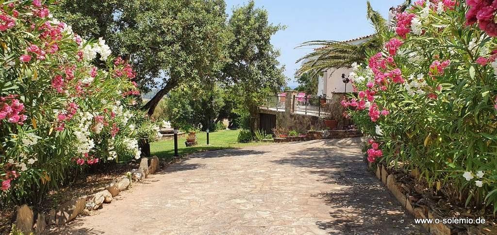 Die Einfahrt zur Villa Sa Petra Ruja - im Sommer ein Blütentraum